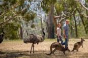Austrálie je skvělá volba pro všechny, kteří chtějí prožít delší dobu v zahraničí a zapracovat na své angličtině, SACE Adelaide