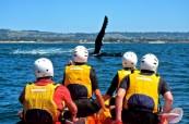 Kayaking v Byron Bay, Lexis Austrálie