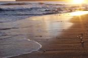 Sunshine Coast je mnohými považován za tropický ráj, Lexis Sunshine Coast, Austrálie