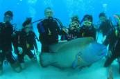 V Cairns, tropickém ráji, je oblíbené potápění, Cairns College of English