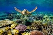 Whitsundays jej lokalita, kterou si musí zamilovat každý student, SACE Whitsundays Austrálie