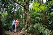 Tropický prales, Cairns College of English Austrálie
